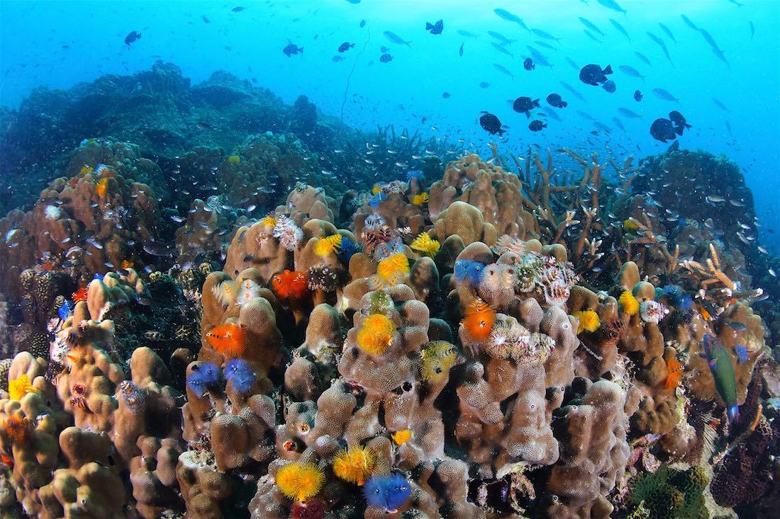 Marine Conservation Internships Koh Tao