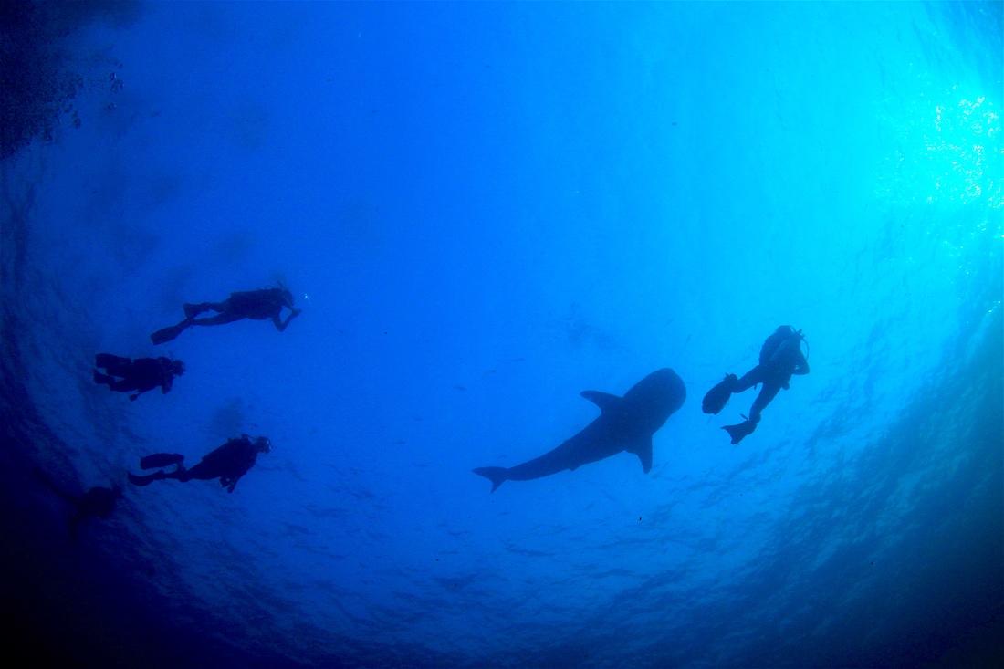 PADI Deep Diver Specialty Koh Tao