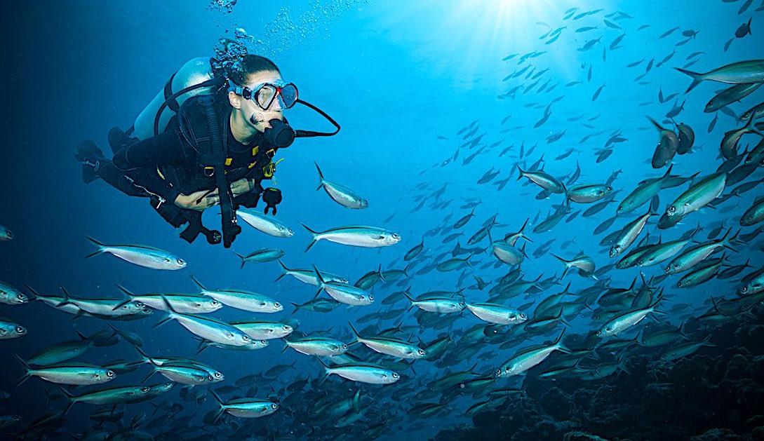 PADI Diving Courses in Koh Tao, Thailand