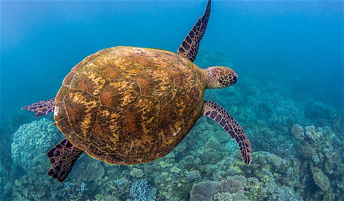 Sea Turtle & Marine Life Koh Tao