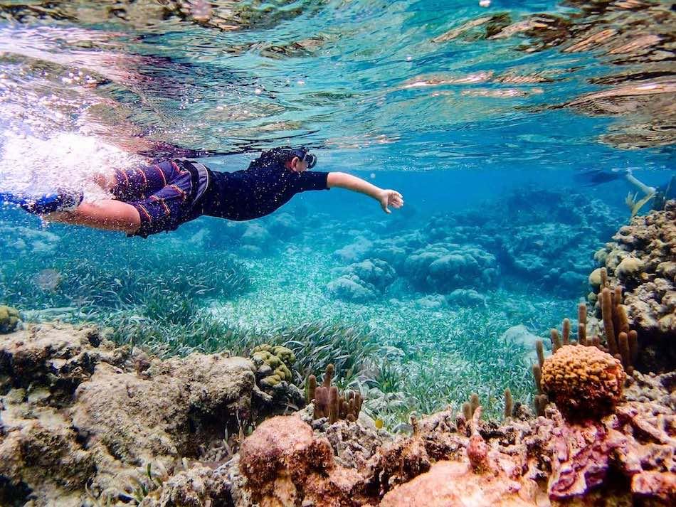 Snorkel Dive - Project AWARE Koh Tao