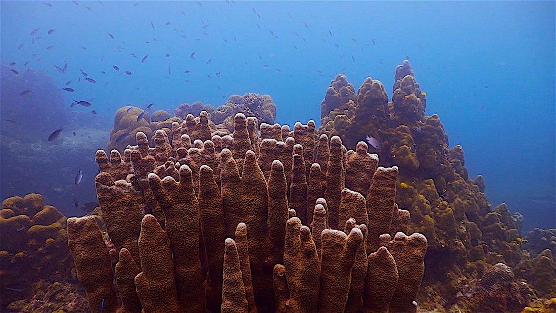 Lighthouse Bay Dive Site Koh Tao - Marine Life