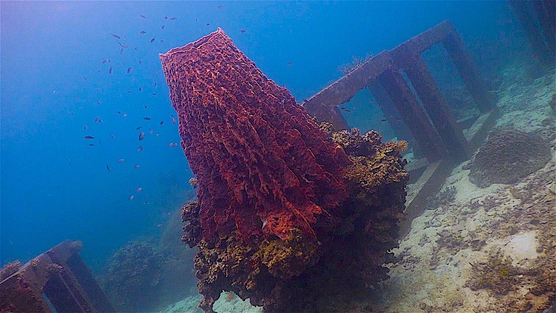 Mango Bay Dive Site
