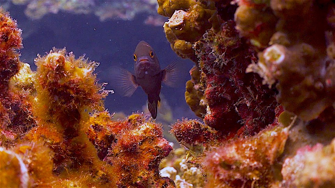 Mango Bay Dive Site for Beginners Koh Tao - Marine Life