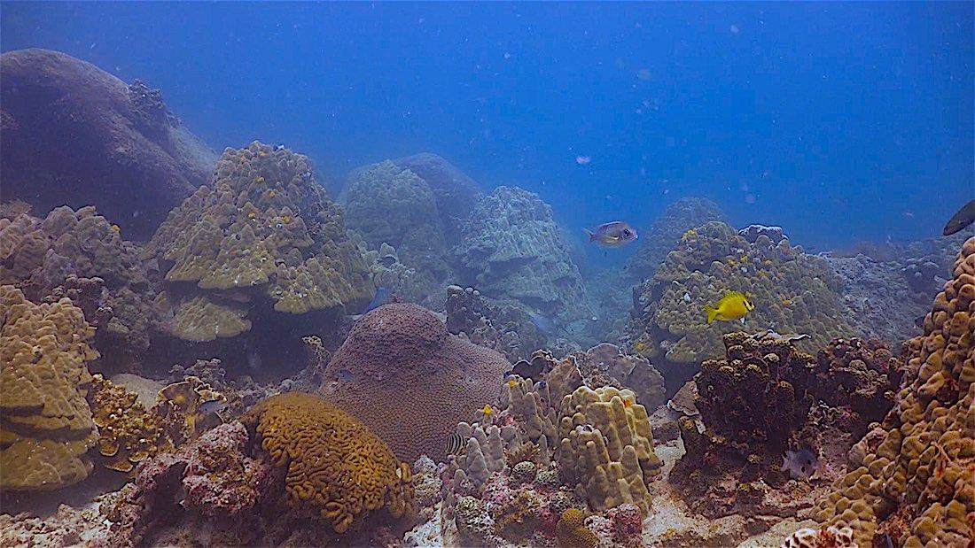 Aow Leuk Dive Site Koh Tao