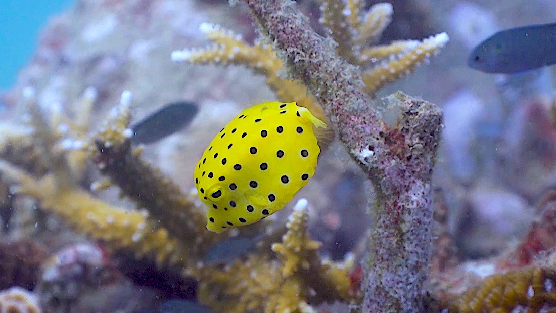 Buoyancy World Dive Site Koh Tao
