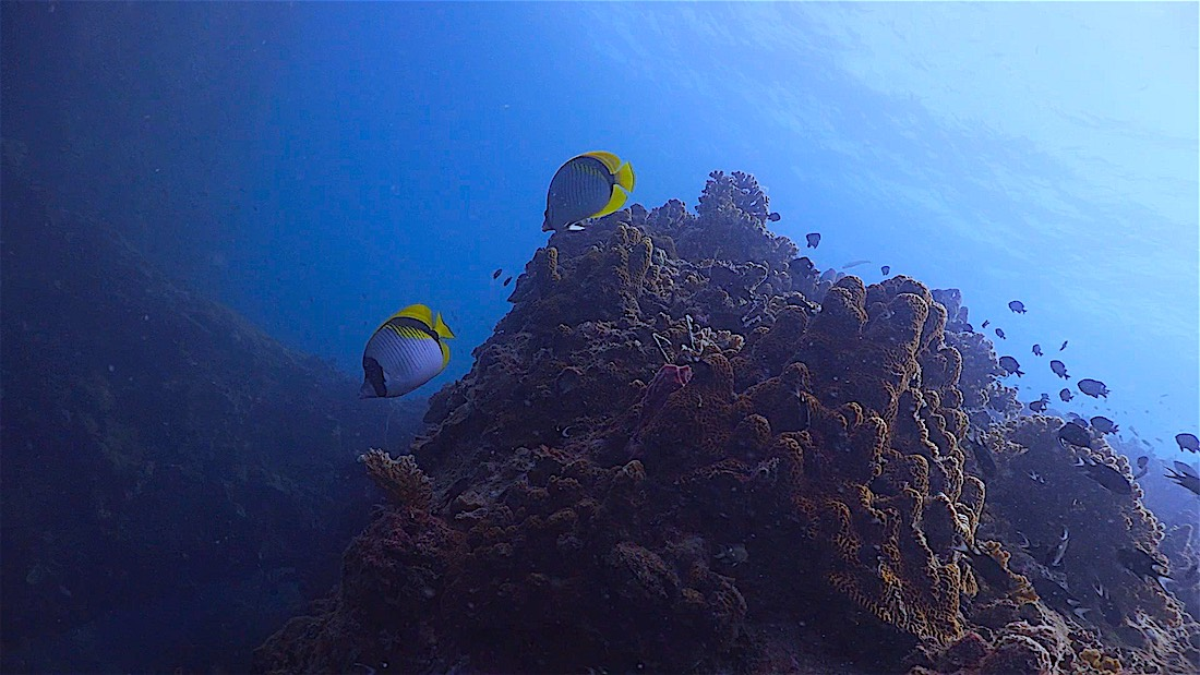 Hin Pee Wee Dive Site - Marine Life