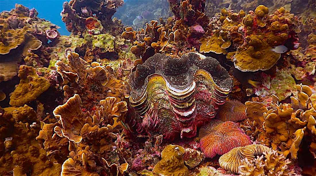 Hin Wong Bay Dive Site
