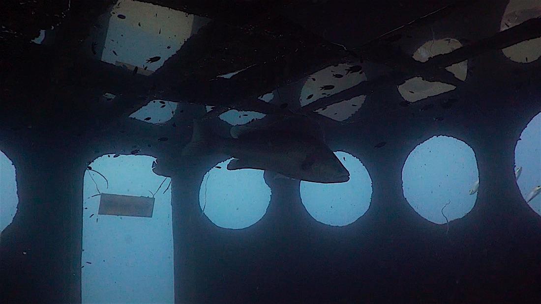 HTMS Sattakut Wreck - Wheelhouse