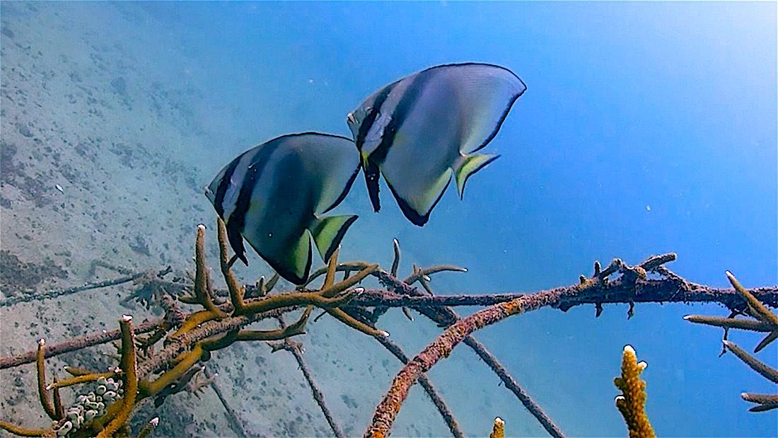 Junkyard Reef Dive Site Koh Tao