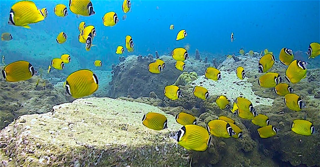 Shark Island Dive Site