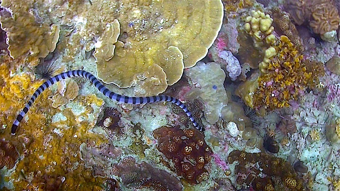White Rock Dive Site Koh Tao | Black Turtle Dive