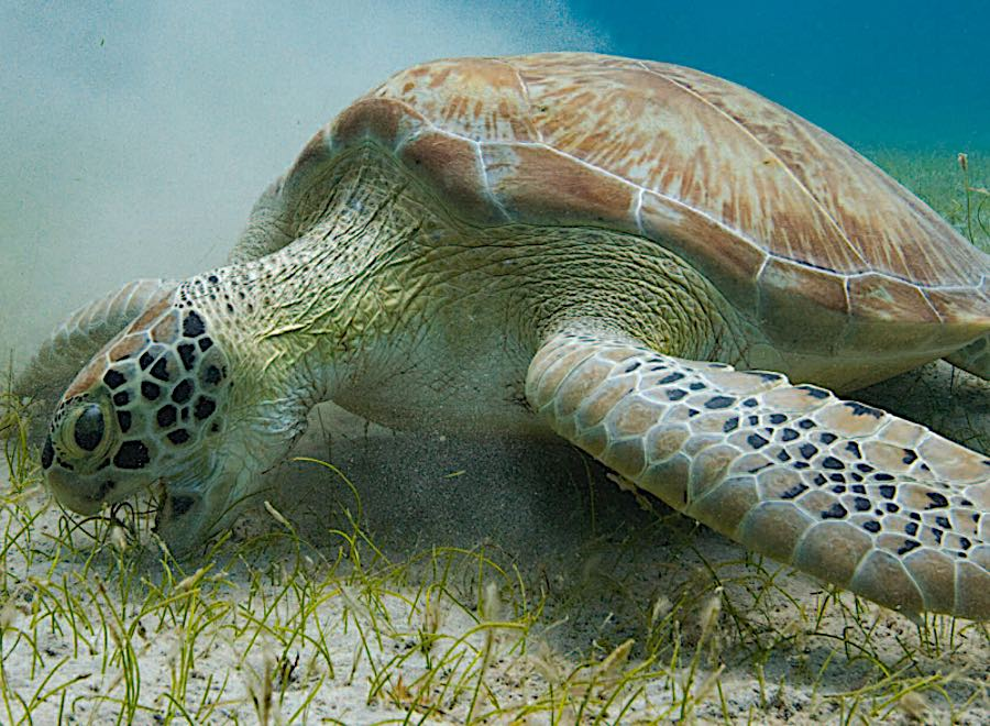 Keeping Sea Grass Beds Healthy
